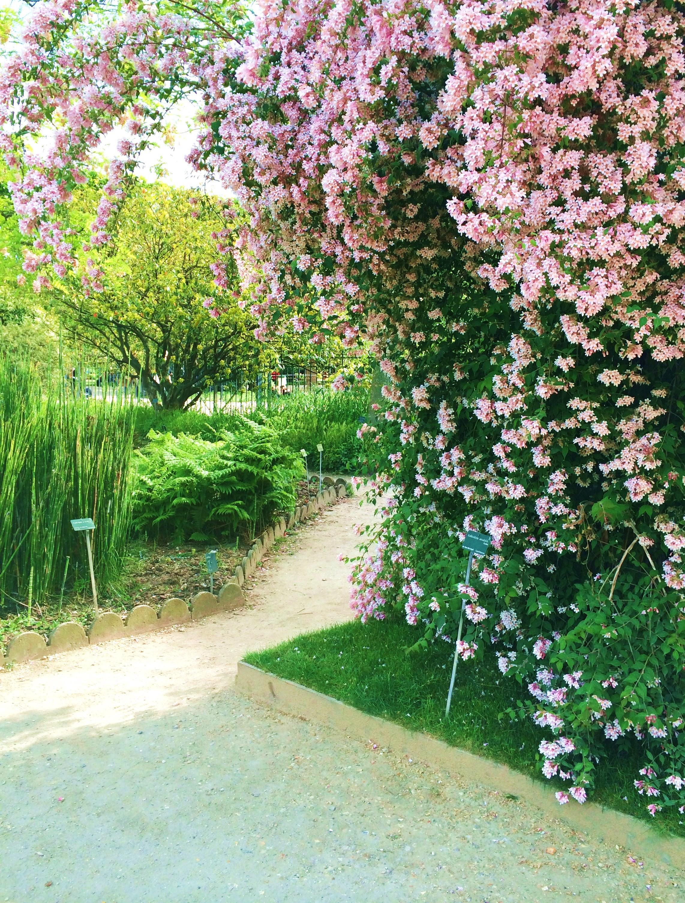 Springtime at Jardin des Plantes Paris Francois et Moi