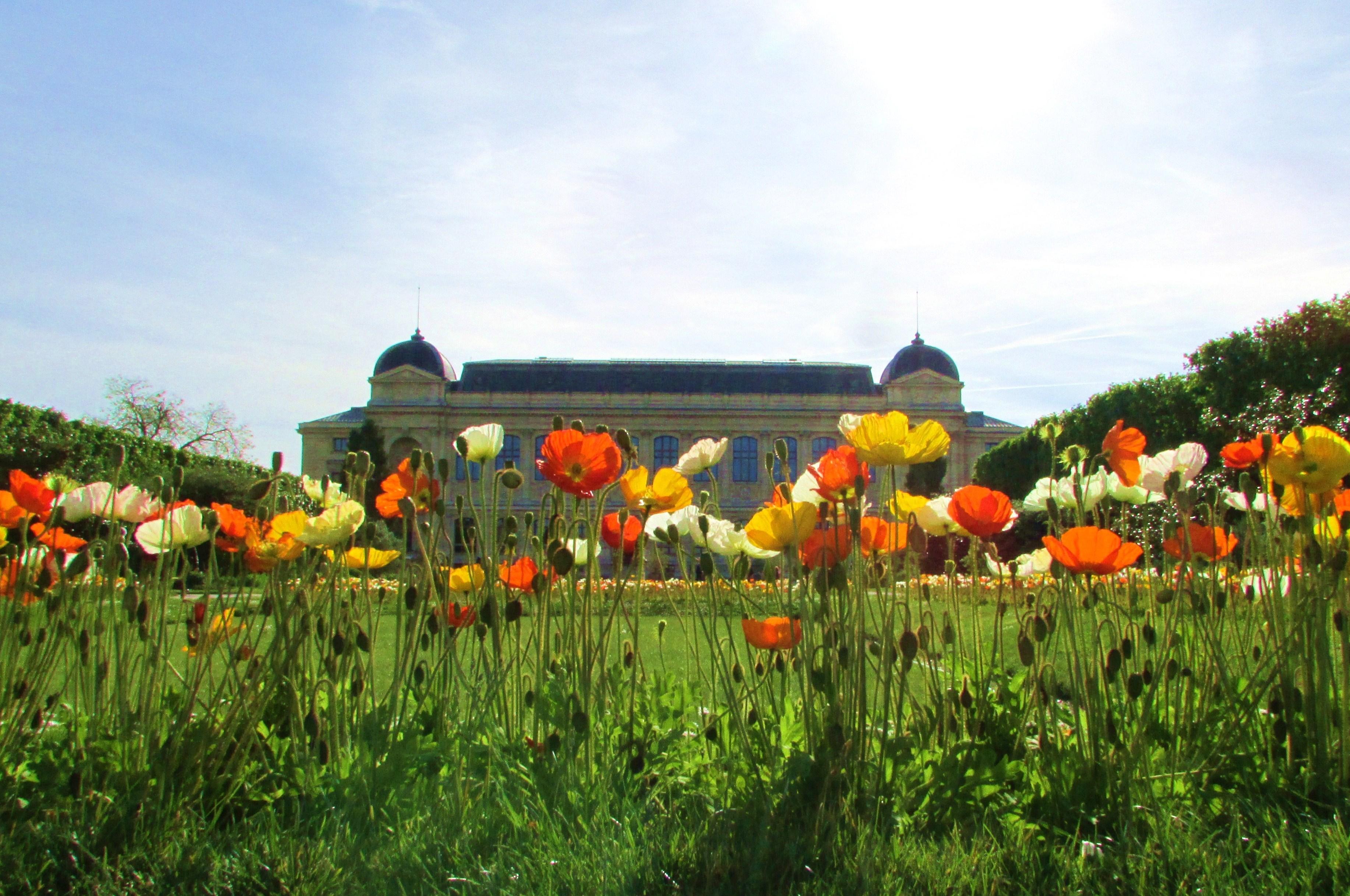 Springtime at jardin des plantes paris francois et moi - Jardin des plantes paris ...